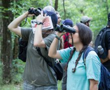 Two-week intersession offers bird watching class