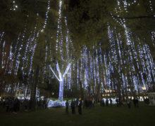 Campus illuminated during annual lighting ceremony